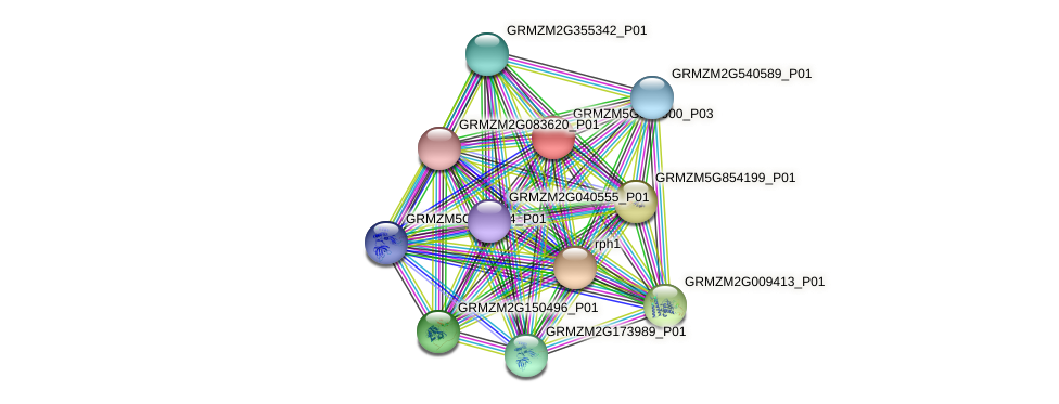 GRMZM5G841900_P03 protein (Zea mays) - STRING interaction network