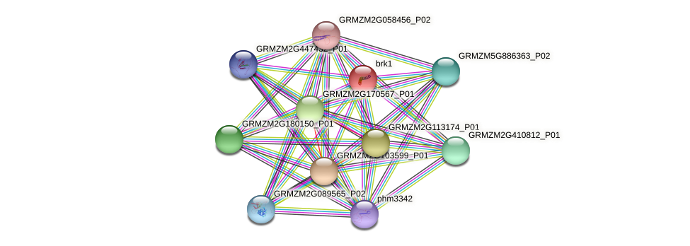 BRK1 protein (Zea mays) - STRING interaction network