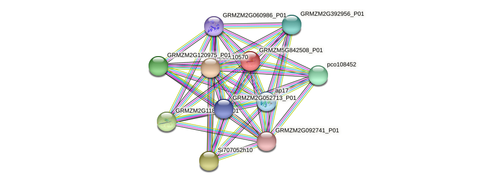 GRMZM5G842508_P01 protein (Zea mays) - STRING interaction network
