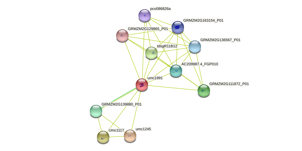 Zm.118239 protein (Zea mays) - STRING interaction network