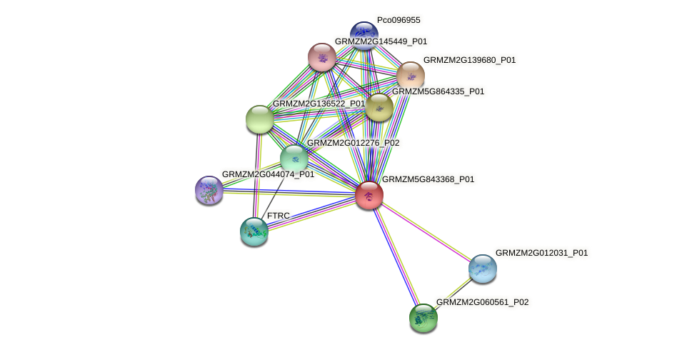 GRMZM5G843368_P01 protein (Zea mays) - STRING interaction network