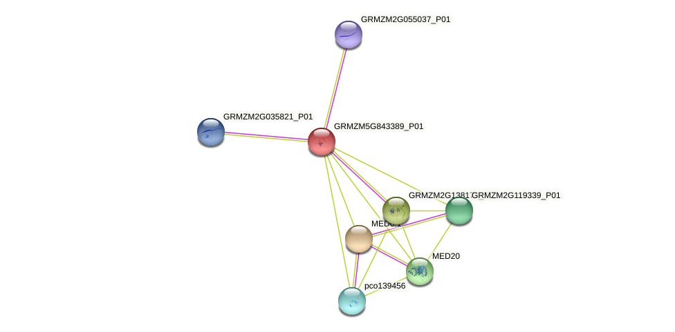 GRMZM5G843389_P01 protein (Zea mays) - STRING interaction network