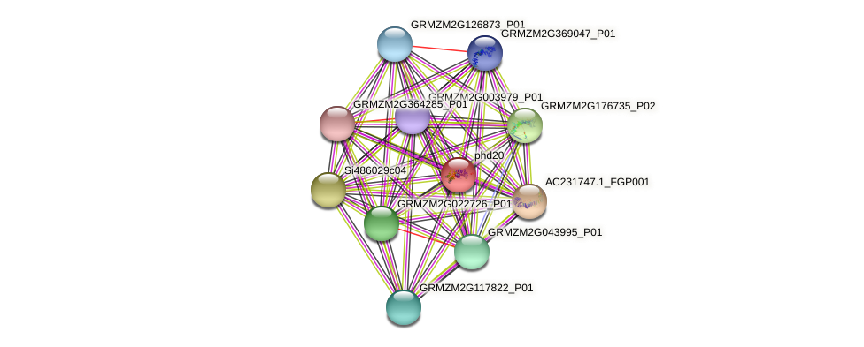 phd20 protein (Zea mays) - STRING interaction network