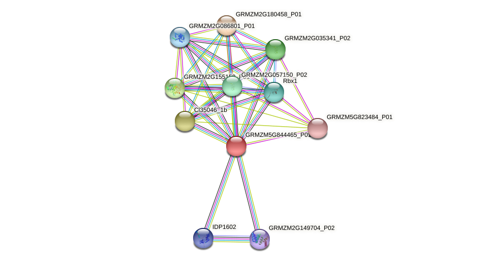 GRMZM5G844465_P01 protein (Zea mays) - STRING interaction network