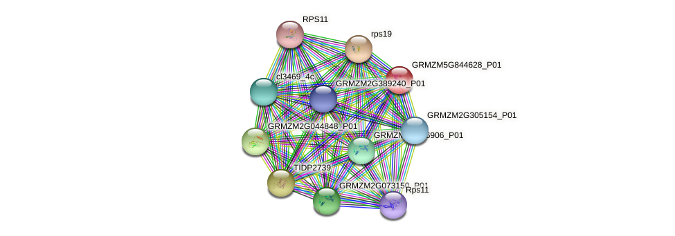 GRMZM5G844628_P01 protein (Zea mays) - STRING interaction network