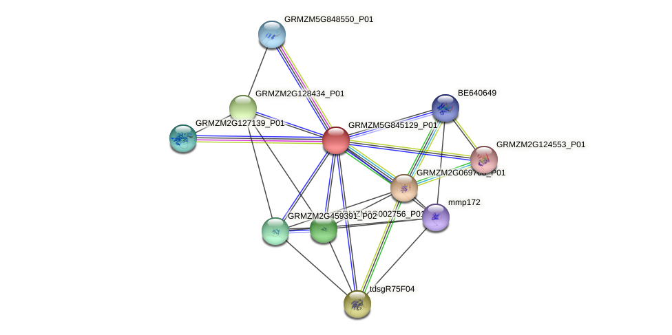 GRMZM5G845129_P01 protein (Zea mays) - STRING interaction network