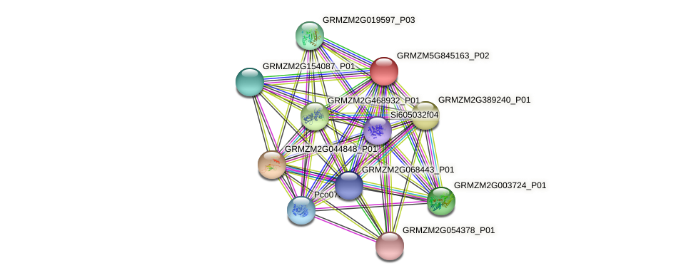 GRMZM5G845163_P02 protein (Zea mays) - STRING interaction network