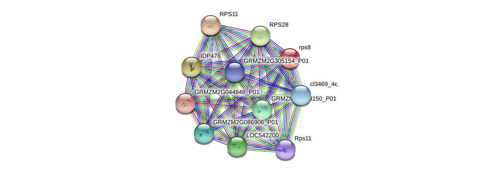 rps8 protein (Zea mays) - STRING interaction network