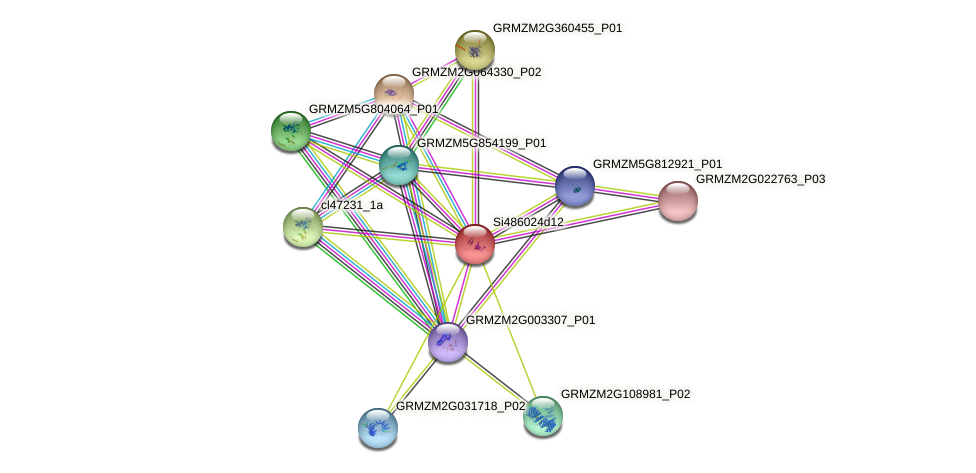 GRMZM5G846140_P01 protein (Zea mays) - STRING interaction network