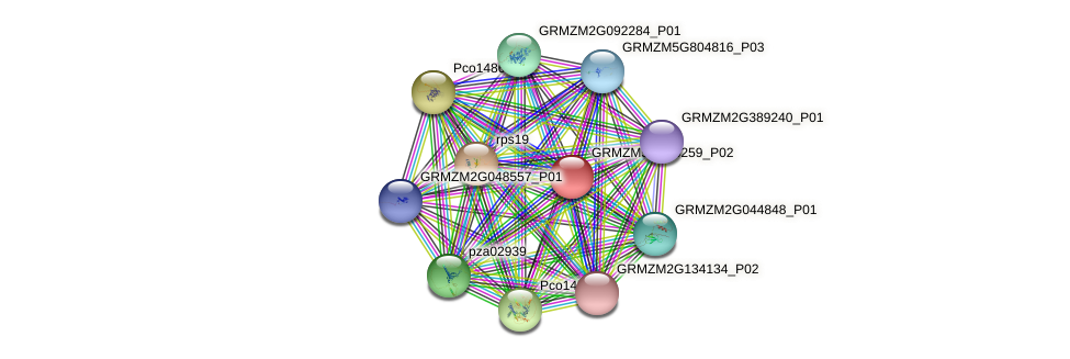 GRMZM5G846259_P02 protein (Zea mays) - STRING interaction network