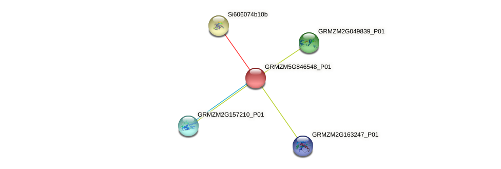 GRMZM5G846548_P01 protein (Zea mays) - STRING interaction network