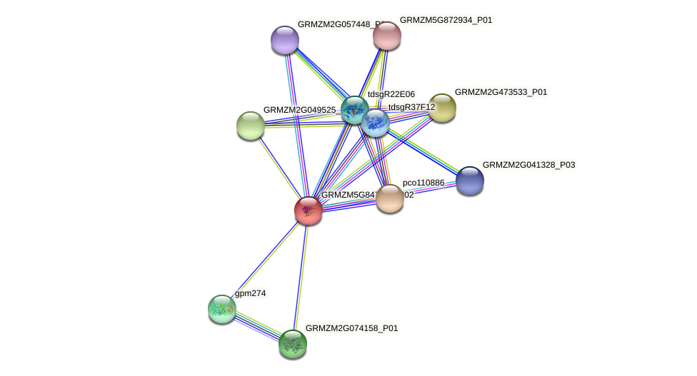 Zm.102959 protein (Zea mays) - STRING interaction network