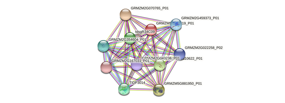 GRMZM5G847219_P01 protein (Zea mays) - STRING interaction network