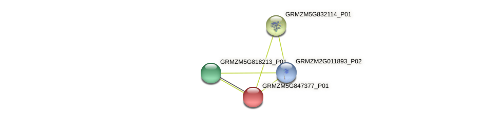 GRMZM5G847377_P01 protein (Zea mays) - STRING interaction network