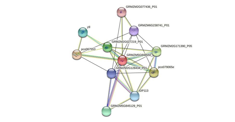 GRMZM5G848550_P01 protein (Zea mays) - STRING interaction network