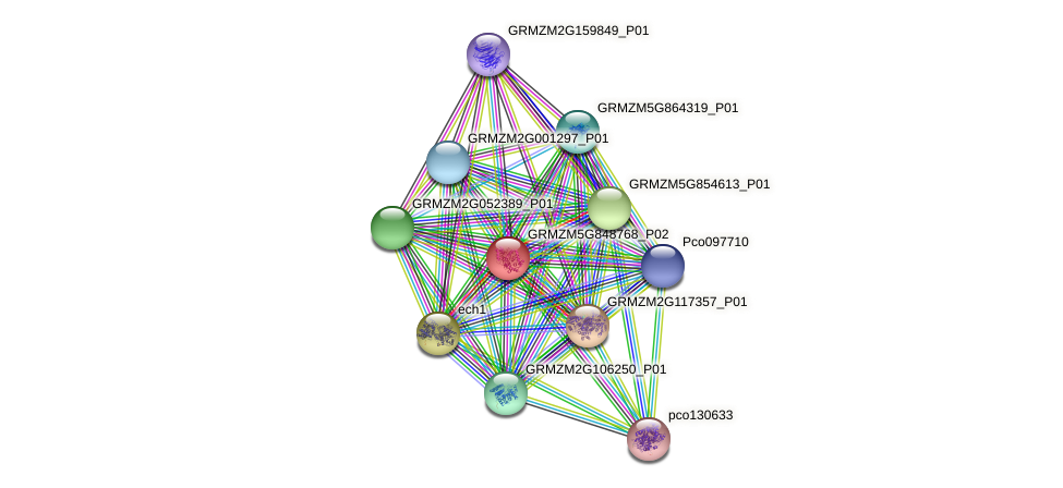 GRMZM5G848768_P02 protein (Zea mays) - STRING interaction network