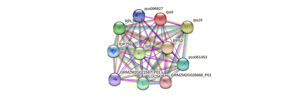 rps4-1 protein (Zea mays) - STRING interaction network