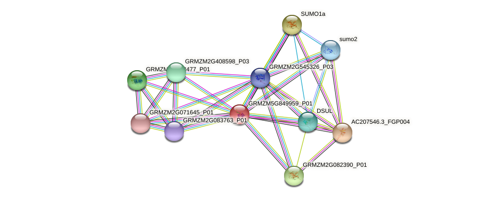 GRMZM5G849959_P01 protein (Zea mays) - STRING interaction network