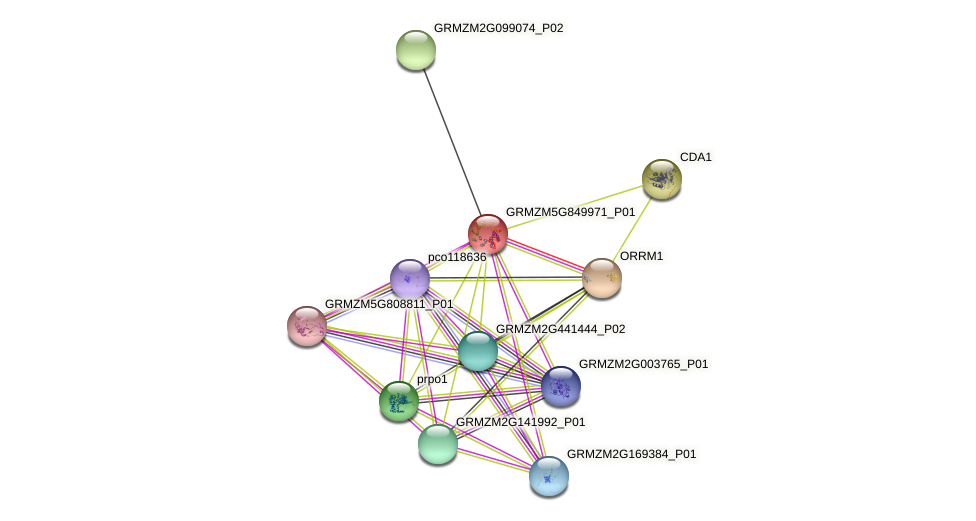 GRMZM5G849971_P01 protein (Zea mays) - STRING interaction network