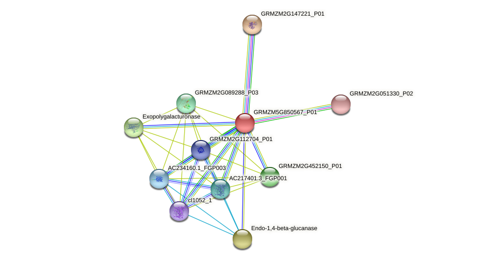 GRMZM5G850567_P01 protein (Zea mays) - STRING interaction network