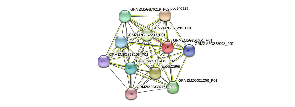 GRMZM5G851051_P01 protein (Zea mays) - STRING interaction network