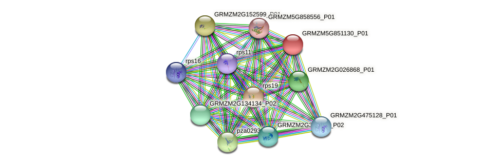 GRMZM5G851130_P01 protein (Zea mays) - STRING interaction network
