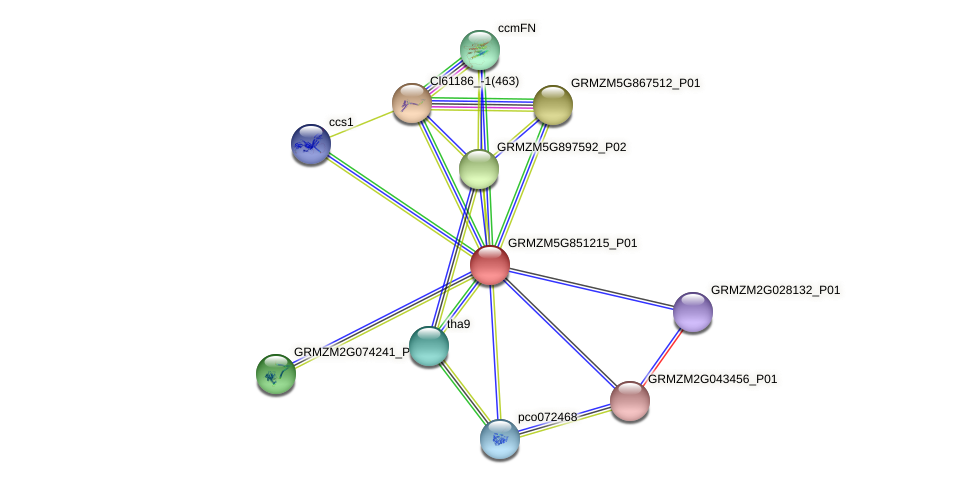 GRMZM5G851215_P01 protein (Zea mays) - STRING interaction network