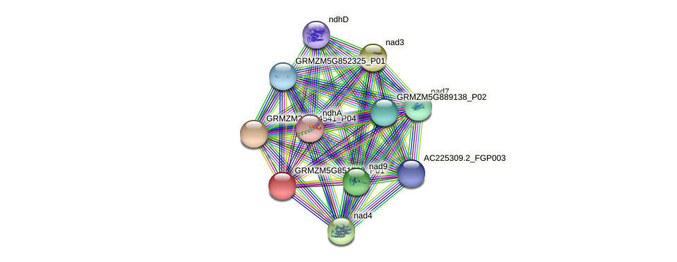 nad4L protein (Zea mays) - STRING interaction network