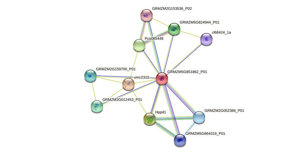 GRMZM5G851862_P01 protein (Zea mays) - STRING interaction network