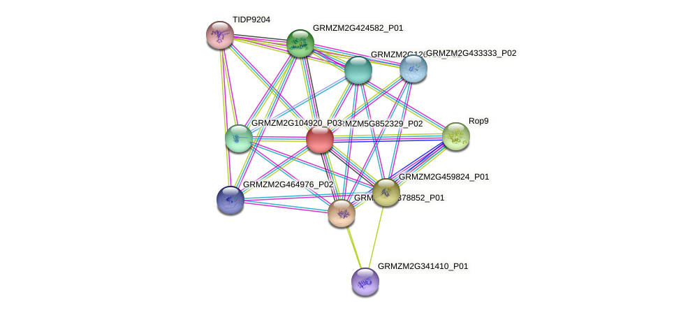 GRMZM5G852329_P01 protein (Zea mays) - STRING interaction network