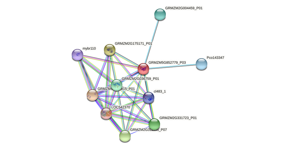 GRMZM5G852779_P03 protein (Zea mays) - STRING interaction network