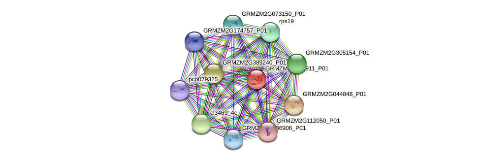 GRMZM5G852911_P01 protein (Zea mays) - STRING interaction network
