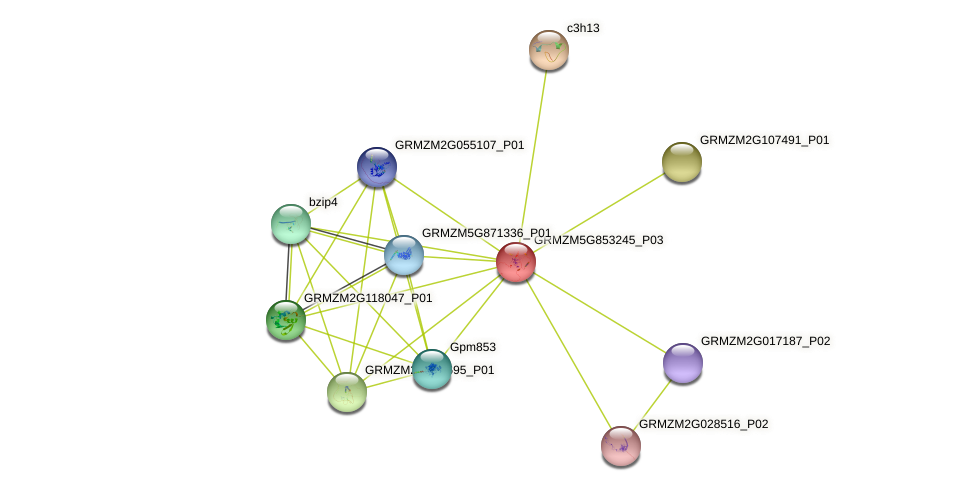 GRMZM5G853245_P03 protein (Zea mays) - STRING interaction network