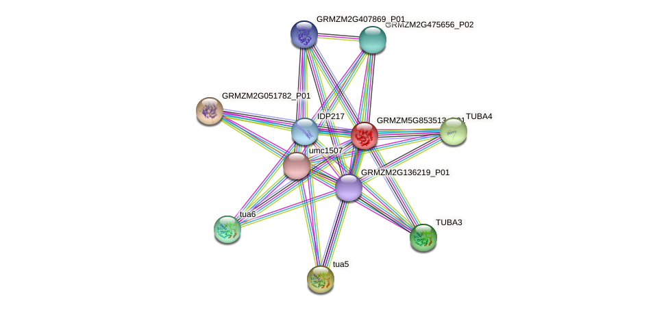 GRMZM5G853513_P01 protein (Zea mays) - STRING interaction network