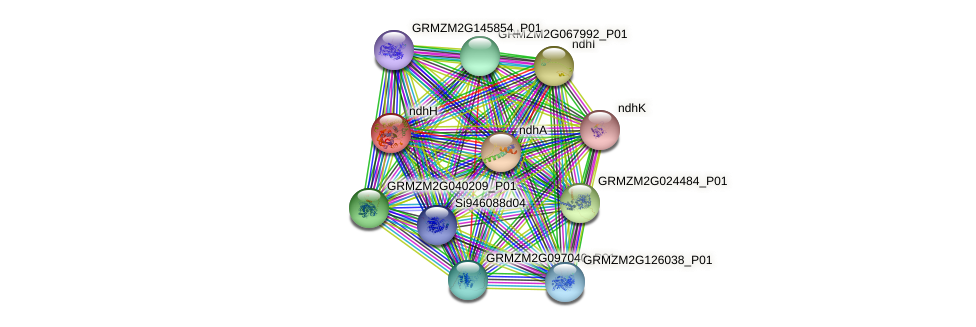 ndhH protein (Zea mays) - STRING interaction network