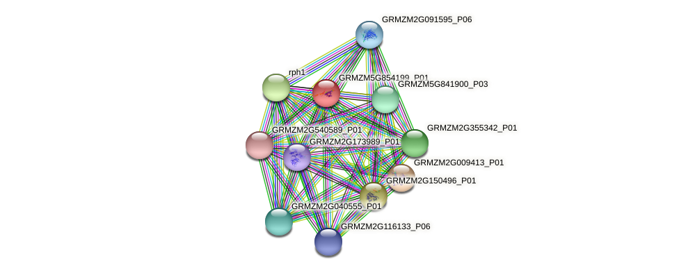 GRMZM5G854199_P01 protein (Zea mays) - STRING interaction network
