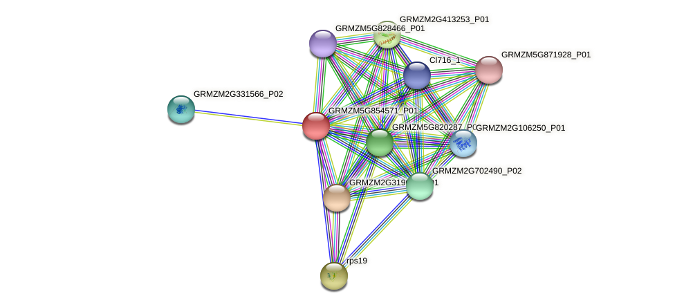 GRMZM5G854571_P01 protein (Zea mays) - STRING interaction network