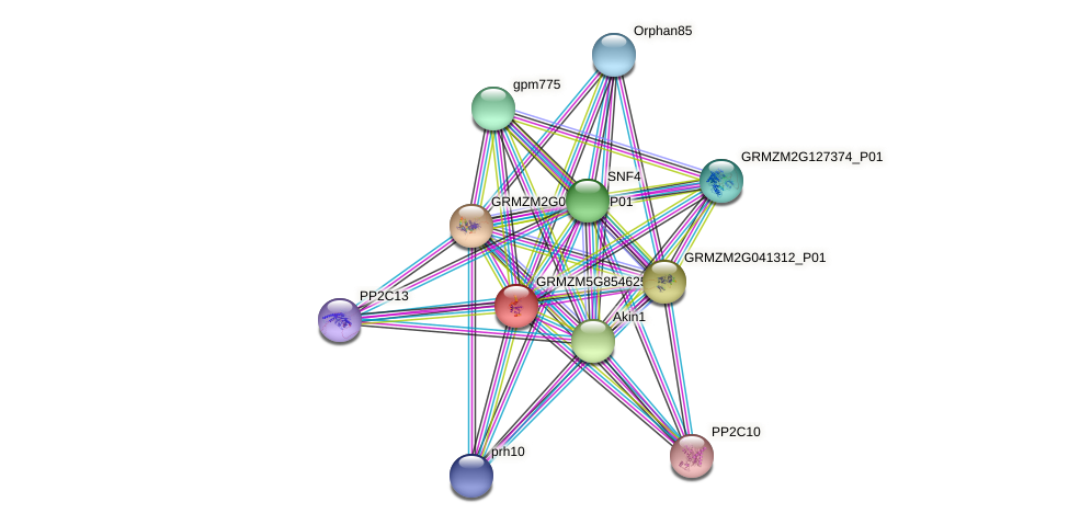 GRMZM5G854625_P02 protein (Zea mays) - STRING interaction network