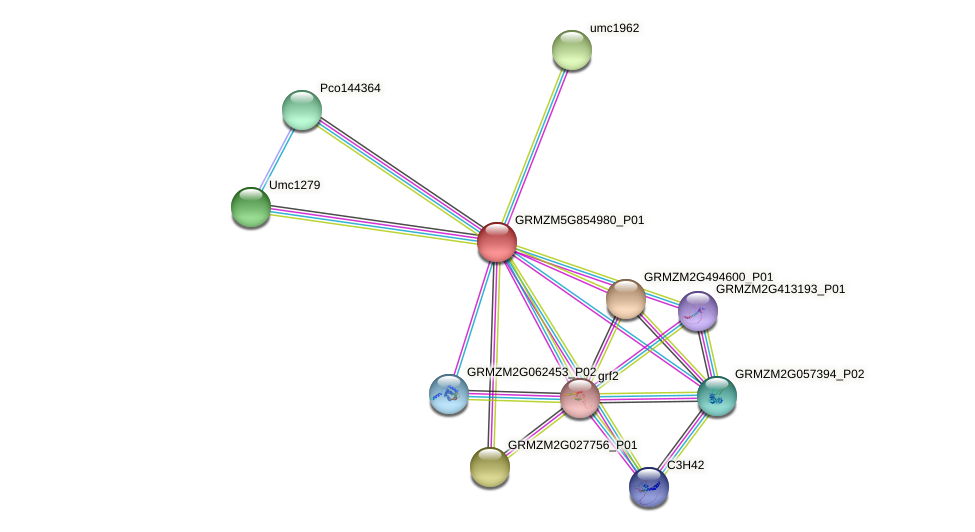 GRMZM5G854980_P01 protein (Zea mays) - STRING interaction network