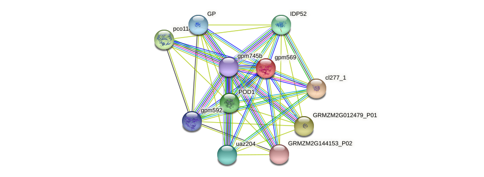 DHAR3 protein (Zea mays) - STRING interaction network