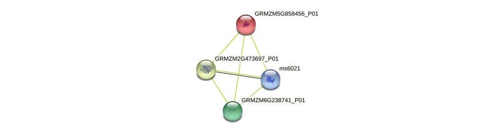 GRMZM5G858456_P01 protein (Zea mays) - STRING interaction network