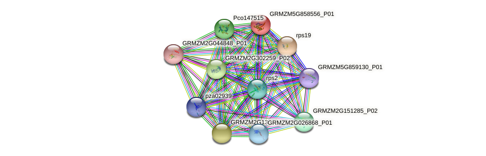 ZemaCp055 protein (Zea mays) - STRING interaction network