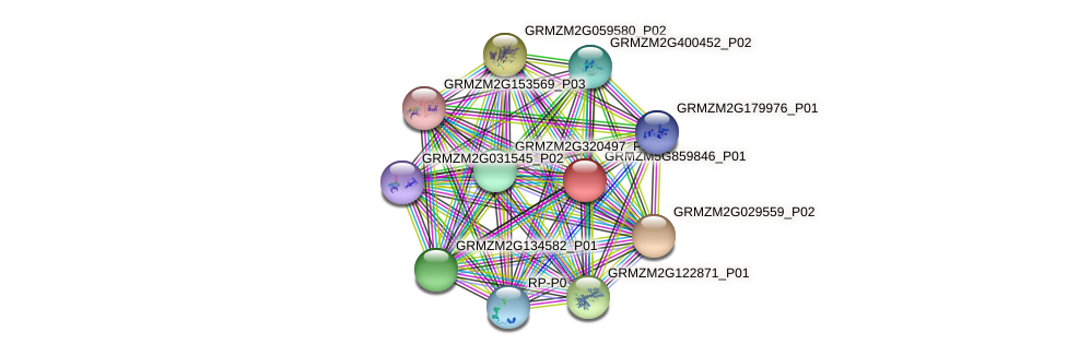 GRMZM5G859846_P01 protein (Zea mays) - STRING interaction network