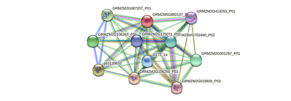 GRMZM5G860137_P01 protein (Zea mays) - STRING interaction network