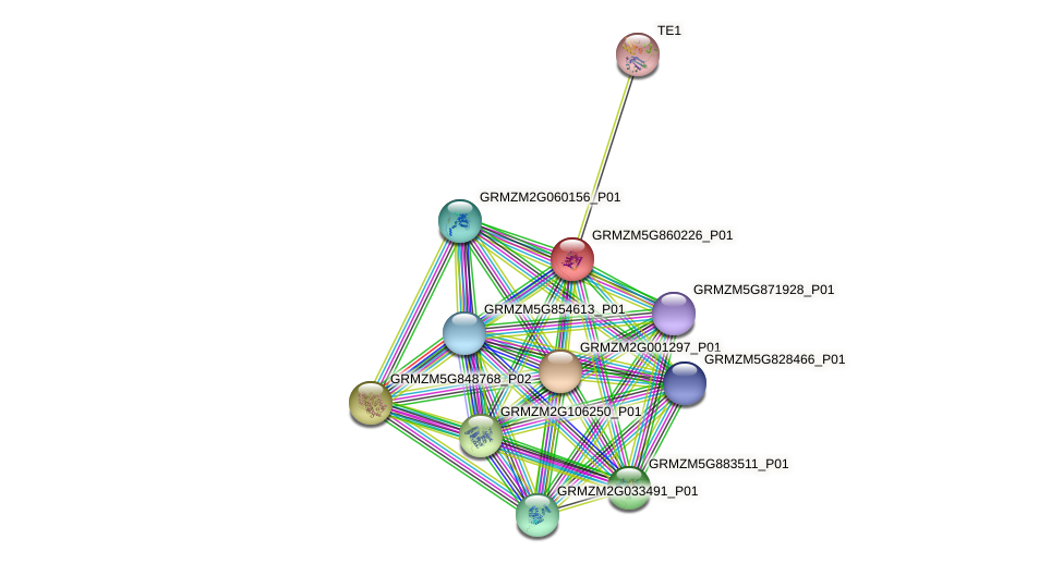 GRMZM5G860226_P01 protein (Zea mays) - STRING interaction network