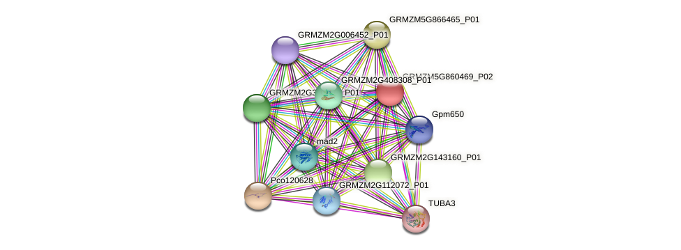 GRMZM5G860469_P02 protein (Zea mays) - STRING interaction network