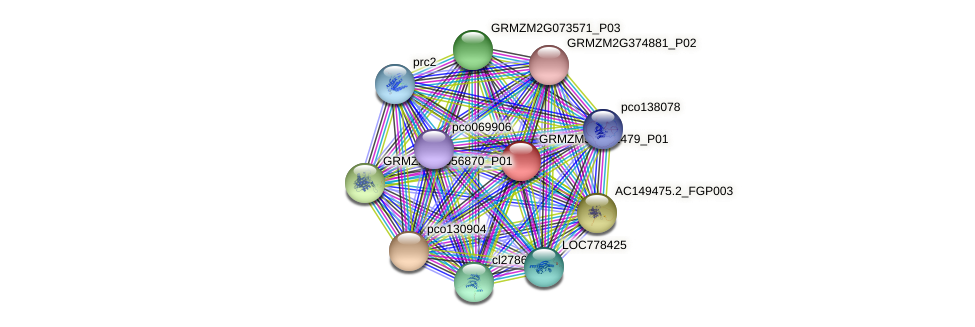 GRMZM5G861479_P01 protein (Zea mays) - STRING interaction network