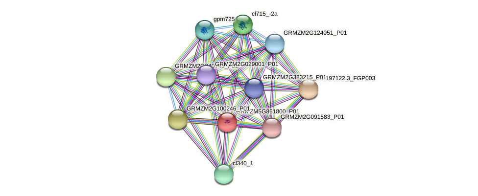 GRMZM5G861800_P01 protein (Zea mays) - STRING interaction network