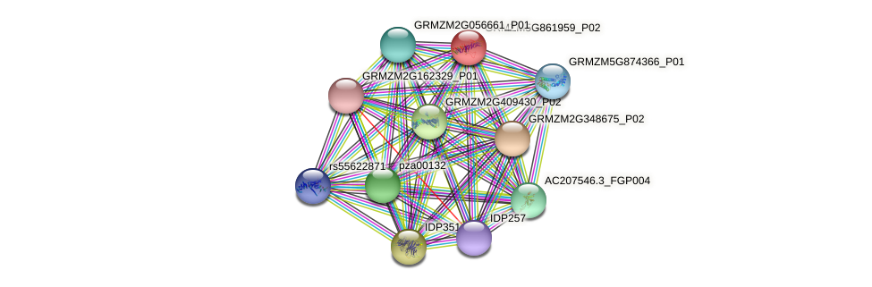 GRMZM5G861959_P02 protein (Zea mays) - STRING interaction network