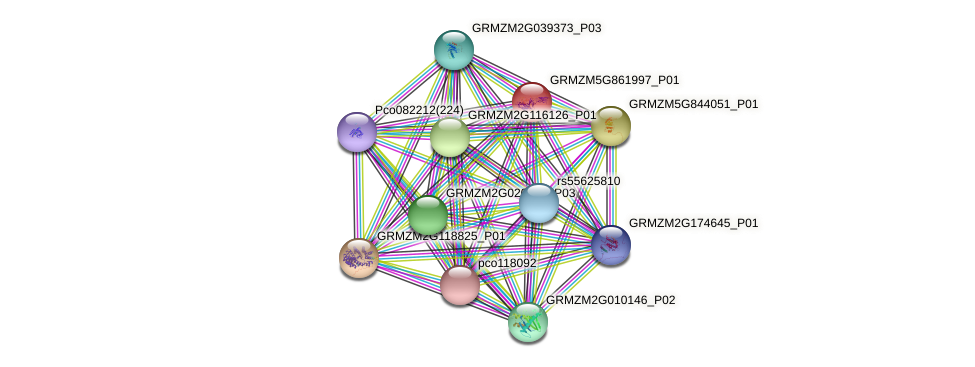 Zm.126352 protein (Zea mays) - STRING interaction network